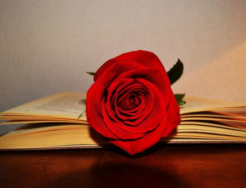 Ya es Sant Jordi, ¡celebra el San Valentín catalán!