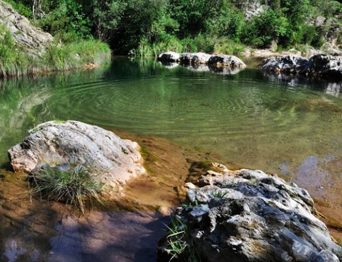Cool off in the middle of nature: river pools, rivers, lakes: Catalonia's natural pools