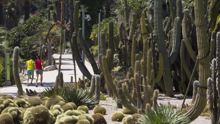 Jardines Mossèn Costa i Llobera Planes baratos Barcelona